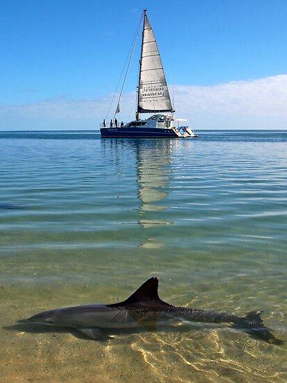 """""""Monkey Mia Magic"""" Shark Bay, Western Australia by wildimagenation"""