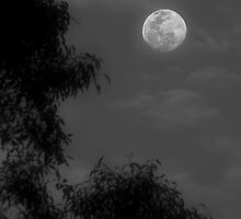 Early Evening Moon by gmpepprell