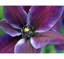 The Power Of Purple Photographic Print