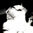 Kitty Prayer by DottieDees