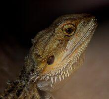 Iguana by annalisa bianchetti