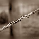 Country Fencing ~ Barbed Wire by Jan  Tribe