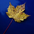"""Blue Maple"" by frogwithwings"