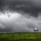white horse by David Robinson