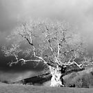 Ancient Tree b&w by mikebov