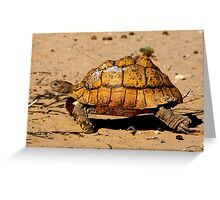 Slow And Steady Wins The Race - Leopard Tortoise Greeting Card
