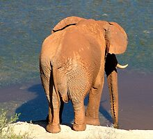 Elephant having a drink by Gareth Leggett