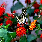 Colored Butterfly In The Flower Garden by photographyes