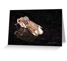 Moth on a Dirty SUV Greeting Card
