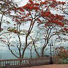 Flame Trees  by AJM71