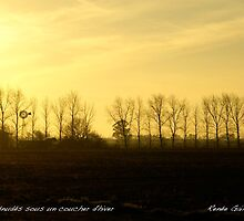 Line of trees in winter sunset, Clyde, Victoria by Reneefroggy