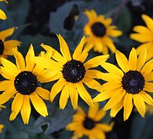 Yellow Helio Flower(s) by sheridankirby
