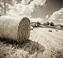Haystacking Time by Karen Havenaar