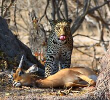 Delicious - Leopard (Panthera Pardus) by Jim O'Rourke