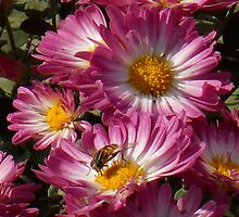 Mums the Word by art2plunder