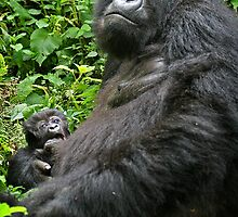 Gorilla Momma by Sandra Farrow
