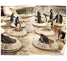 Penguin Paradise Poster
