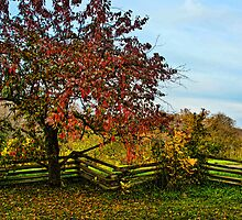 APPLE TREE & SPLIT RAIL FENCE by pshootermike