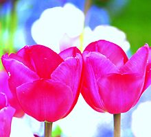 Fleurs Abstract 3 by Sally Haldane