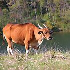 Banteng by Laurel Talabere