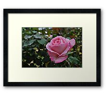 A Rose For You Framed Print