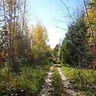 A trail to wonderland. by Brenden Bencharski