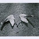 Winged by Steve Lovegrove