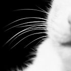 Whiskers by Minna  Waring