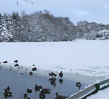 Snow White - Stamford Park Boating Lake, Stalybridge by dawnandchris