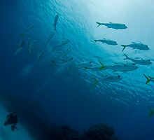 Divers and Jacks by Todd Krebs