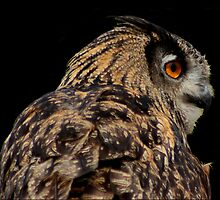 Eurasian Eagle Owl by arcadian7