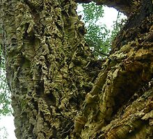 In-tree-guing question? Solved by bubblehex08 ~ Cork Oak tree ~  by pix-elation