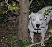 Lily Blue Eyes by chrisuk