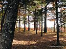 Autumn Forest in Wisconsin 2 of 2 by Barberelli