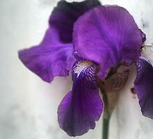 Iris in the wind by Rob Beckett
