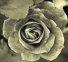 Rose FRAT by Barbara Anderson
