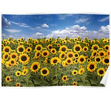 Sunflower Field With Heavenly Sky Poster