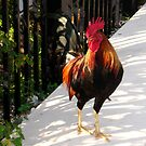 The Red Rooster in Key West, FL by Susanne Van Hulst