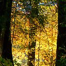 A Forest in Fall.... No3 by Larry Llewellyn