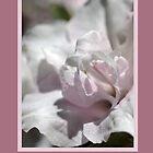 Thank You - Card . . .  Flowers by Joy Watson