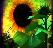 Sunflower by Deb Gibbons