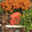 Autumn at Tender Crop Farm by Monica M. Scanlan