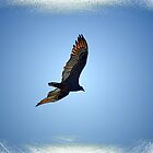 Soaring On The Wind by George  Link