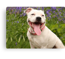 Laughter is the best doggy medicine too! Canvas Print