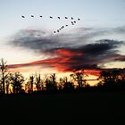 Sunset with Canadian Geese flying past by Samuel  Dodd