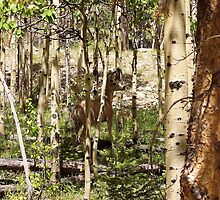 Can You See Me Now in the Aspens, Colorado Rockys by David  Hughes