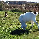 Goat and Kitty by cherylc1