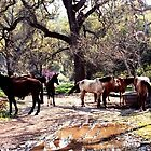 The Watering Hole - Horses gathered at Three Rivers California by Rick Short