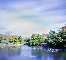 Pond in the park with ghostly gulls by inkedsandra