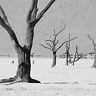 Dead Trees Kalahari Desert by stronart